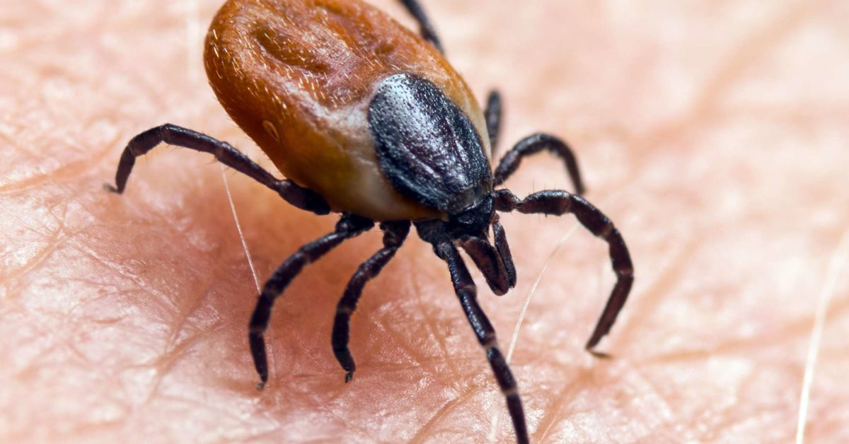 Chronic Lyme disease: Symptoms, diagnosis, and treatment