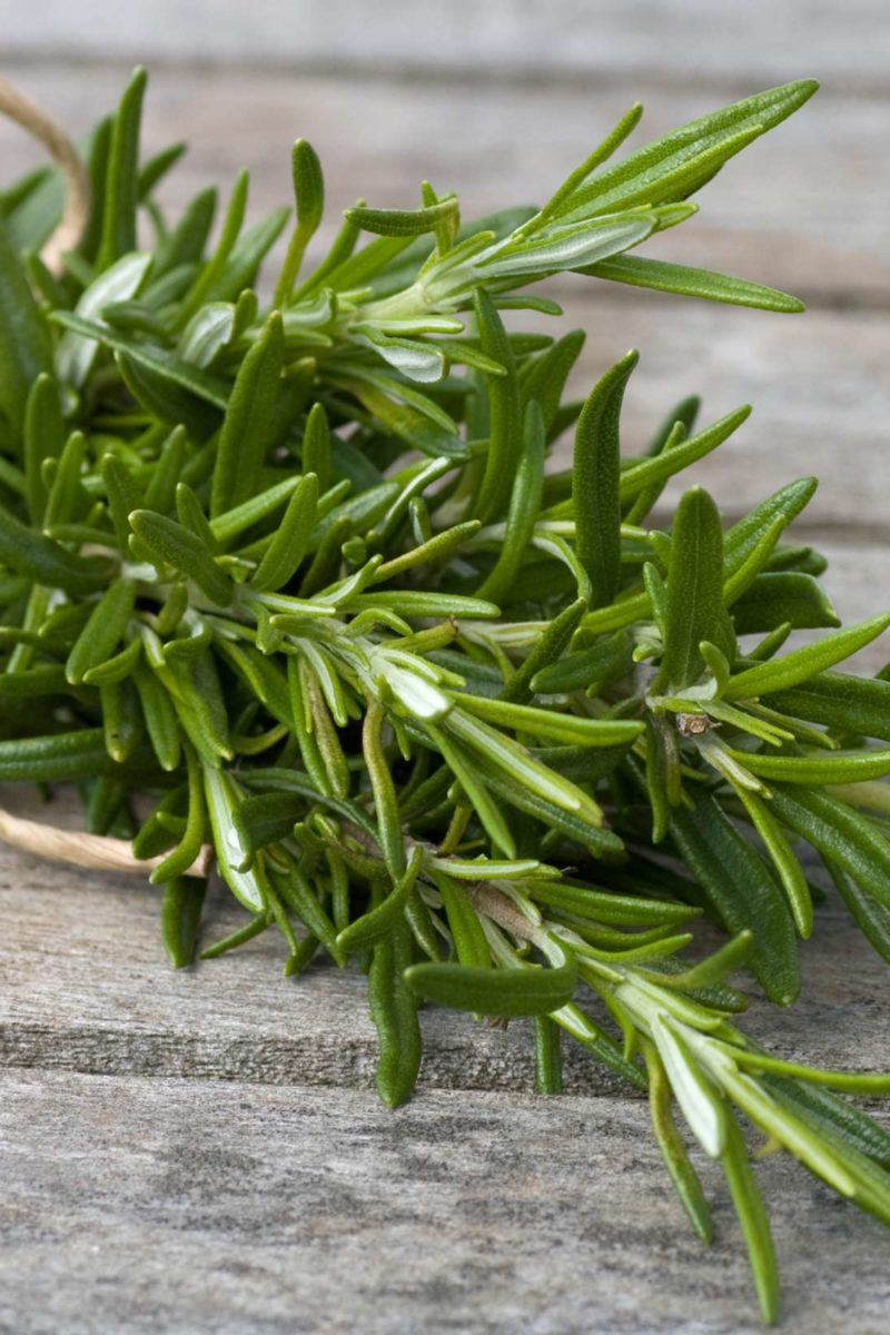 Rosemary Health Benefits Precautions And Drug Interactions