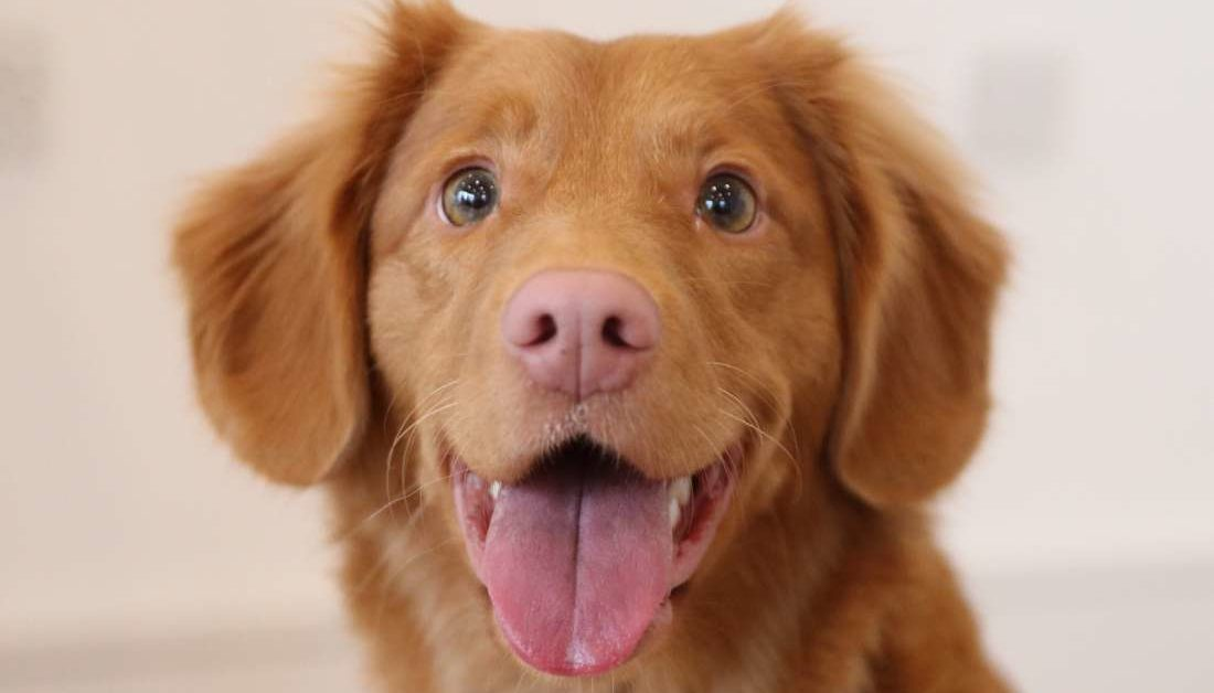 How dogs contribute to your health and happiness