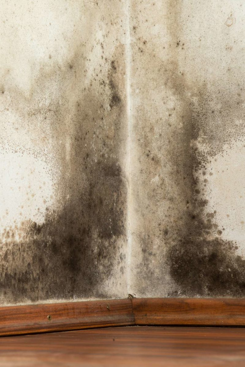 What Is Black Mold Called