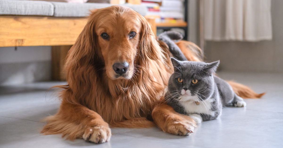 How does the new coronavirus affect our pets?