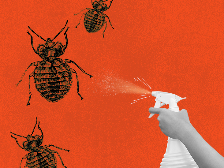Bed bug sprays: Best product options and other tips