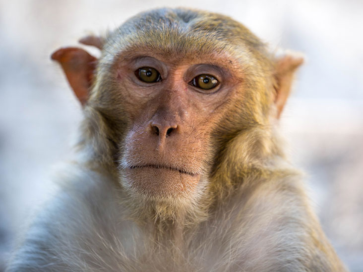 COVID-19 vaccine successfully protects macaques against virus