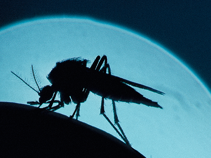 Zika and other arboviruses linked to neurological issues
